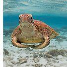 Turtle yoga by Kara Murphy