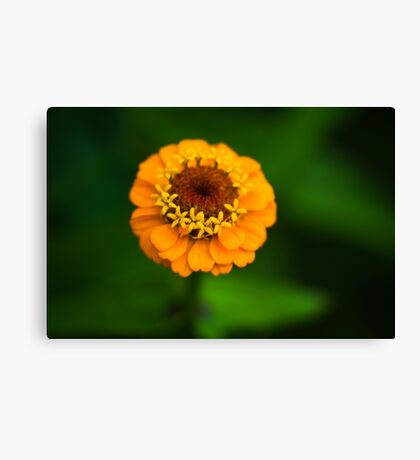 Orange and Green - Beautiful Together Canvas Print