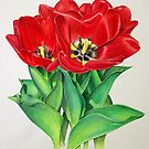 Red Tulips by joeyartist