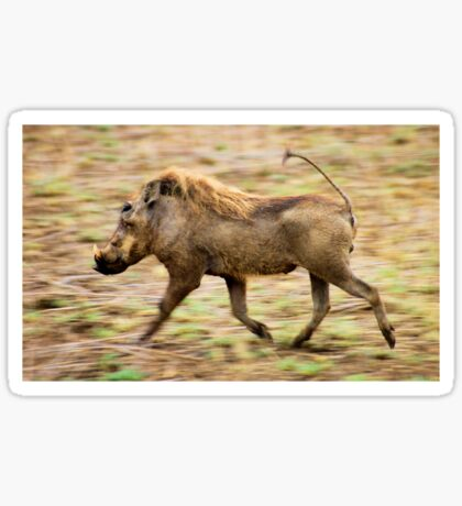 THE WARTHOG, Phacochoerus aethiopicus - The signal catcher ! Sticker