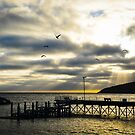 Christmas Cove, Penneshaw South Australia by Candy Jubb