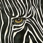 Zebra Eye by Catherine  Howell