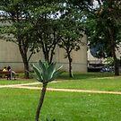 Garden of the Centro Cultural Banco do Brasil, Brasília by Frans Harren