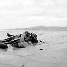 Seaweed at the beach by Sarah Cowan