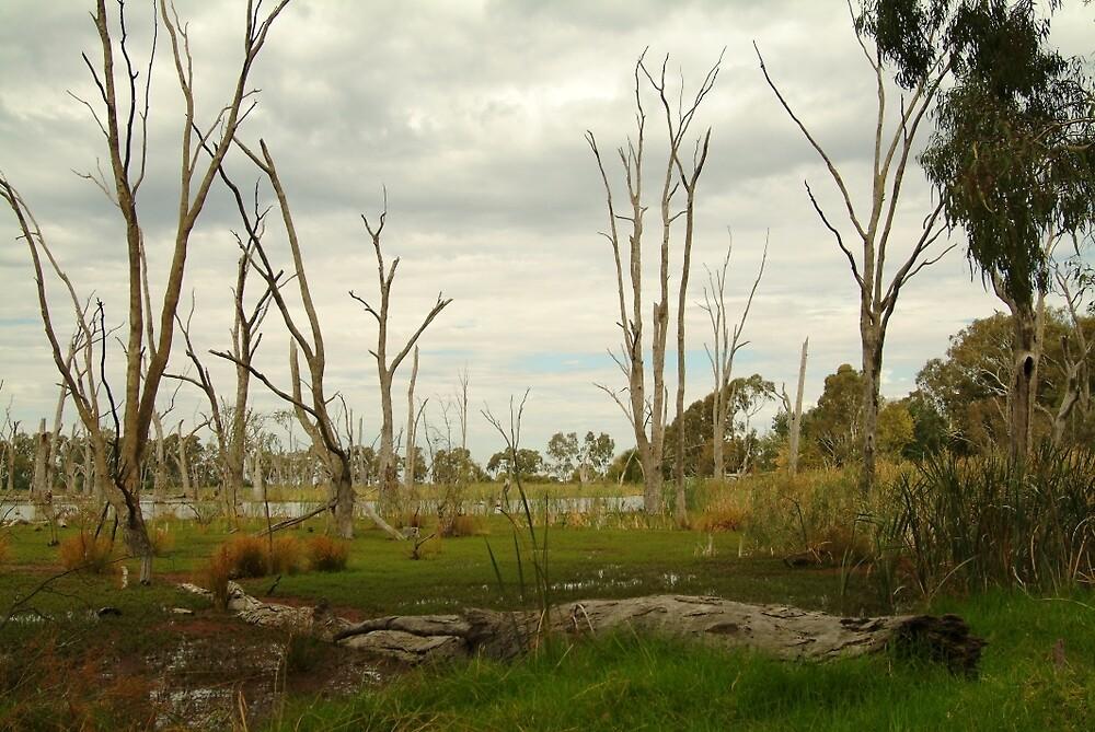 Joe Mortelliti Gallery - Gunbower Creek, near Cohuna and the Murray River, Victoria, Australia.  by thisisaustralia