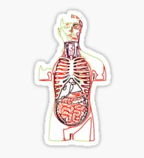 Human Medical Anatomy biology t shirt Sticker