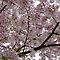 FLOWERING TREES (NOT a REDBUD)