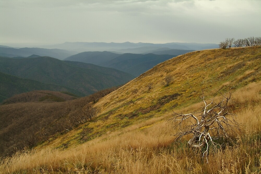 Joe Mortelliti Gallery - View from the Blue Rag Range, alpine Victoria, alpine Victoria, Australia. by thisisaustralia