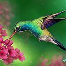 Hummingbird by Kristofer Floyd