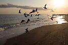 Morning sun by smilyjay