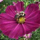 The Pollenator by AutumnMoon