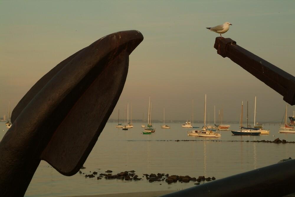 Joe Mortelliti Gallery - Seagull settles on an anchor at Williamstown, Victoria, Australia. by thisisaustralia