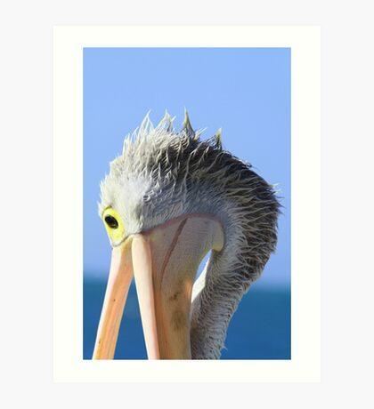 Pelican Eating Art Print