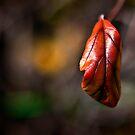Lonely leaf.  by DaveBassett