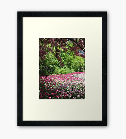 Dance of the Tulips Framed Print