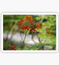 Barbados Spring Theme - Pride of Barbados (Dwarf Poinciana or Flower Fence) If you like, purchase, try a cell phone cover thanks! Sticker