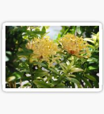 Barbados Spring Theme - Pink Ixora If you like, please purchase, try a cell phone cover thanks Sticker