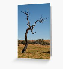 Joe Mortelliti Gallery - Gidgee Tree, Simpson Desert, Queensland, Australia. Greeting Card