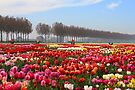 Show Garden Tulip Festival by Jo Nijenhuis