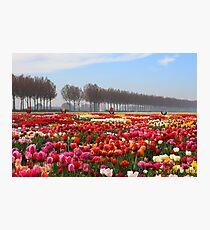 Show Garden Tulip Festival Photographic Print