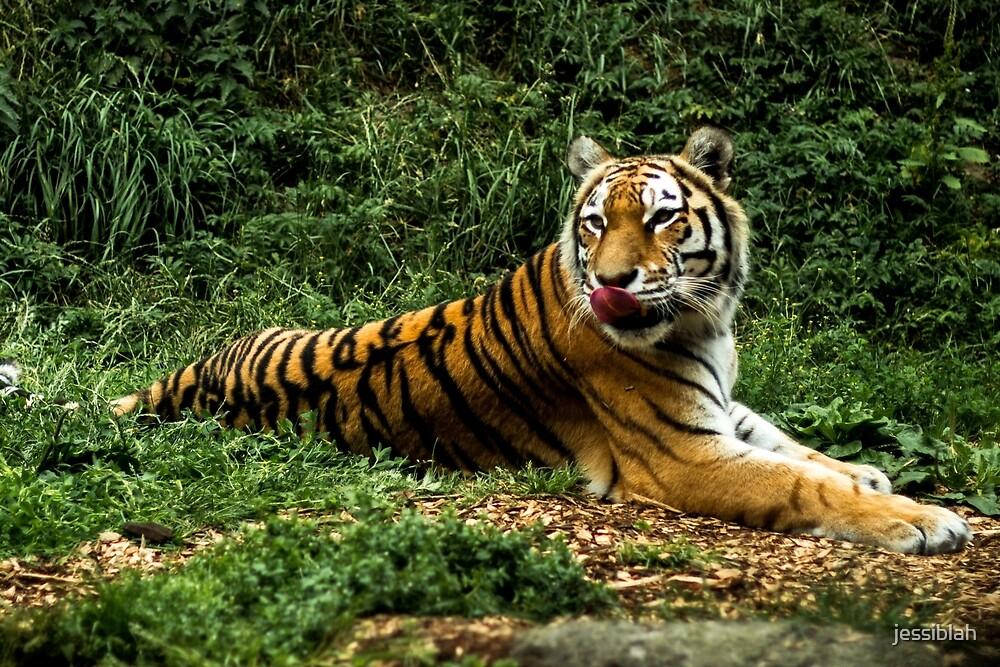 Tiger leckt seine Nase\