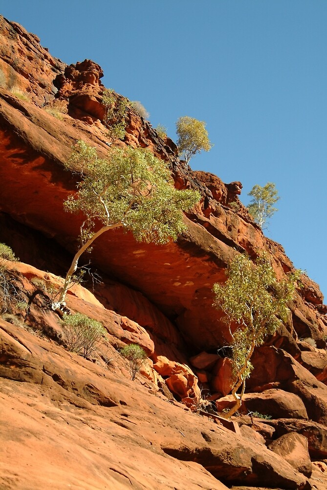 Joe Mortelliti Gallery - Palm Valley, MacDonnell Ranges, Northern Territory, Australia. by thisisaustralia