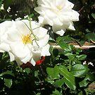 Praying Mantis On The Roses by robertemerald