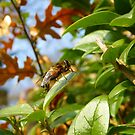 Save the Bees by LuleaUrbaNature