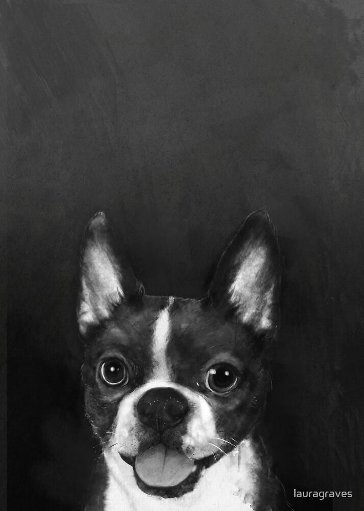 boston terrier  by lauragraves
