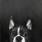 boston terrier  by lauragraves