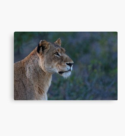 Early Morning Search Canvas Print