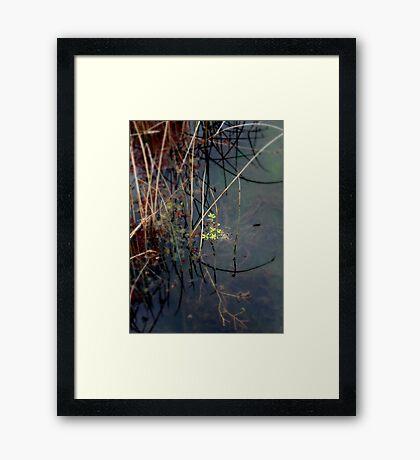Salisbury Waters Framed Print