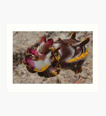 Flamboyant Cuttlefish, Kapalai, Sabah, Malaysia Art Print