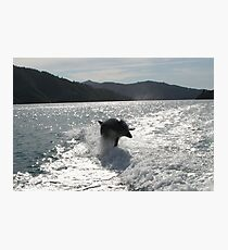 Bottlenose Dolphin Photographic Print