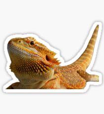 Bearded dragon Sticker