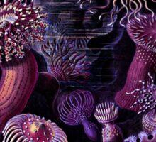 Actiniae Purple Anemones Sticker
