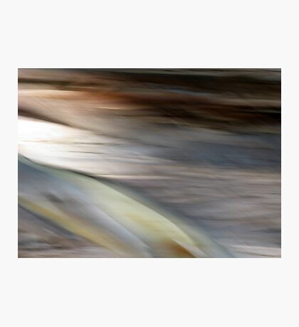 Eucalyptus #1 Photographic Print