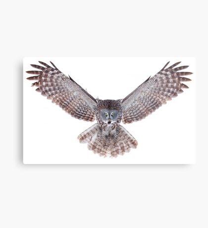 Power - Great Grey Owl Metal Print