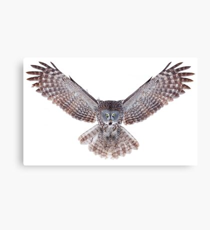 Power - Great Grey Owl Canvas Print