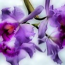 Orchidtime by adbetron