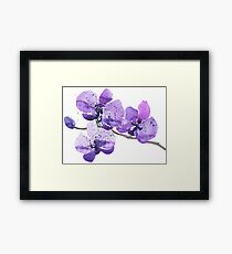 Purple Orchid Watercolor Framed Print