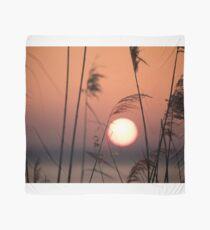 Sunset through the canes, Monte del Lago, Lago Trasimeno, Umbria, Italy Scarf