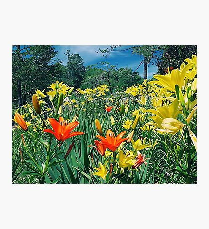 Flowers on the Hill Photographic Print