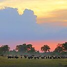 Evening in paradise by Explorations Africa Dan MacKenzie