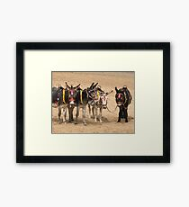British Beach Donkeys Framed Print