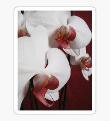 Orchid collection Sticker
