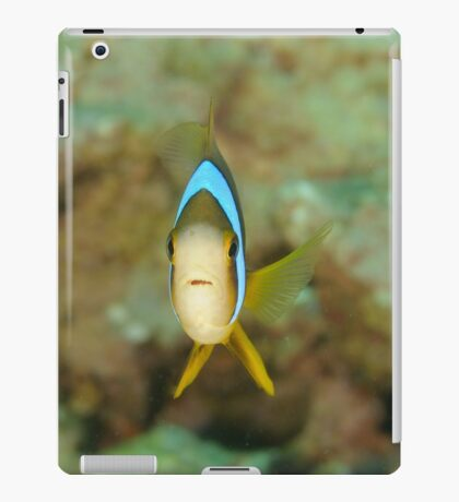 Barrier Reef Anemonefish - Amphiprion akindynos iPad Case/Skin