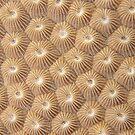 Stony Coral by Andrew Trevor-Jones