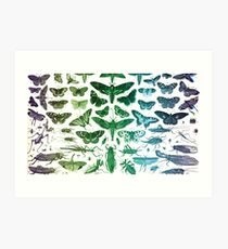 Study of Insects Art Print