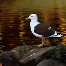 Gull at Sunset by Linda Cutche